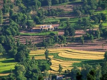 マレーシアの農園・プランテーション企業サラワク・オイルパーム、バイオディーゼル生産工場を完成
