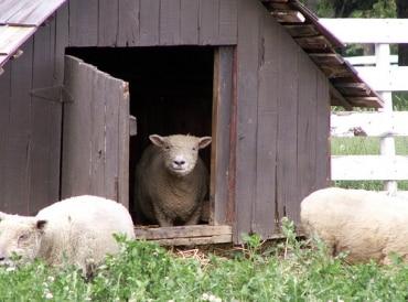 畜産のタイフードグループがタイ証券取引所上場