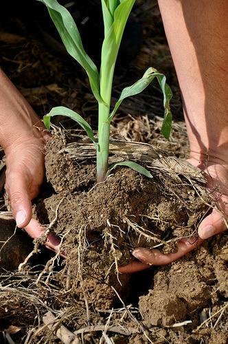 タイの農業分野、商品作物の価格下落に関して