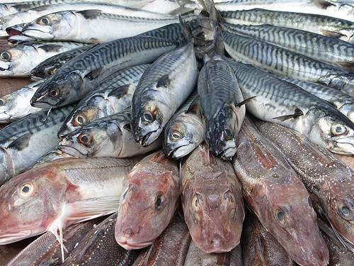 タイの養殖・魚系飼料製造上場企業、タイ・リュクス・エンタープライズ、企業解説