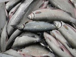 魚介類・ツナ缶の最大手、タイ・ユニオン・グループは第3四半期好調を維持