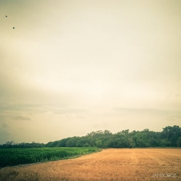 マレーシアの中堅農園・パームオイル企業に関して(1)