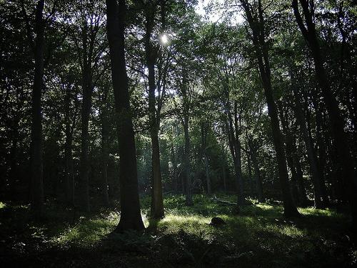 タイ国内の農業所得を高め、森林保護を目的とするアプリ開発