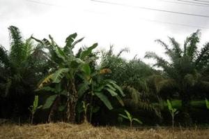 マレーシアの不動産・パームオイル事業、IOIグループ業績【マレーシア:農業】