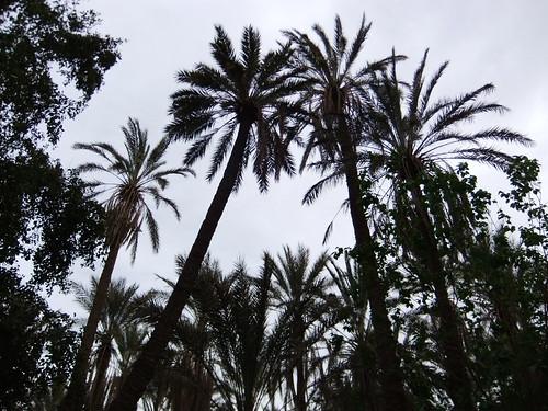 インドネシアのパームオイル大手、アストラ・アグロ・レスタリ、企業解説【インドネシア:農園・食品】