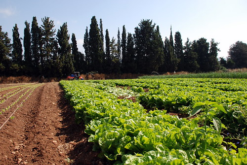 農園・不動産など複合事業を展開するハップセン・コンソリデーテッド、企業解説【マレーシア:複合企業】