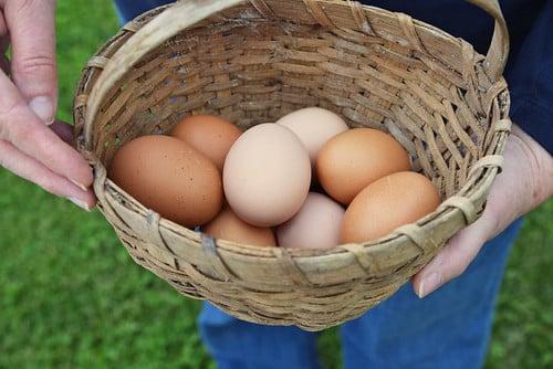 マレーシア国内で家禽や鶏卵の価格上昇【マレーシア:農産物・畜産】