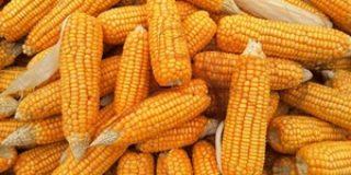 インド資本農業大手UPLグループのタイ子会社パシフィック・シード・タイ、企業解説【タイ・インド:農業】